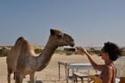 Egitto Novembre 2008 20